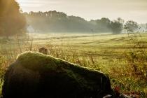 natur_landschaft12